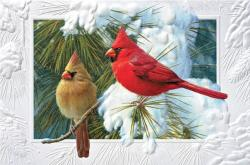 Candid Cardinals Boxed Christmas Cards